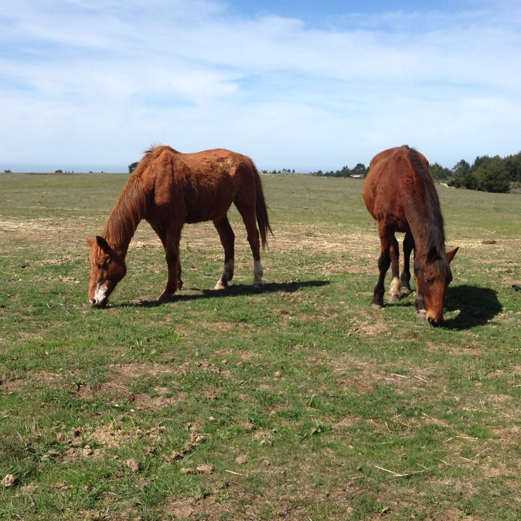 elderly retired horses grazing on green pastures at Wild Tender Horse Sancturay