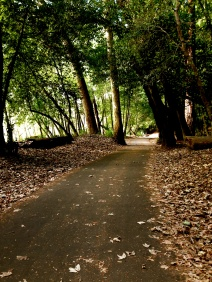 View of the path ahead with nobody on it. Quiet and peaceful, lined with large trees.