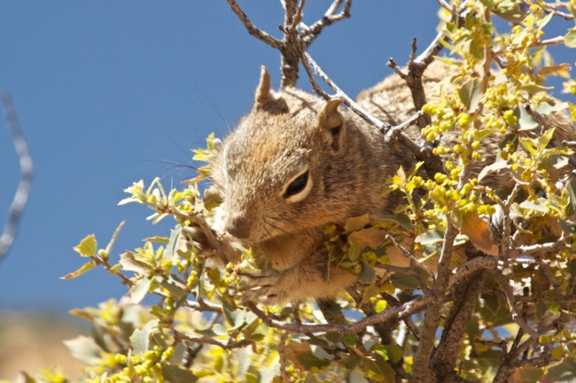 Squirrel at Zion