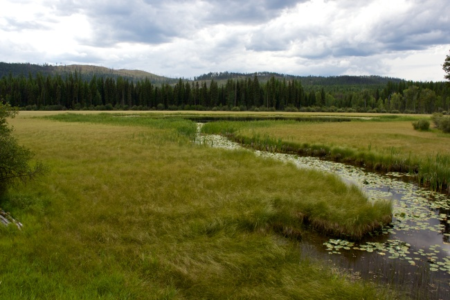 Green marsh with river winding through it