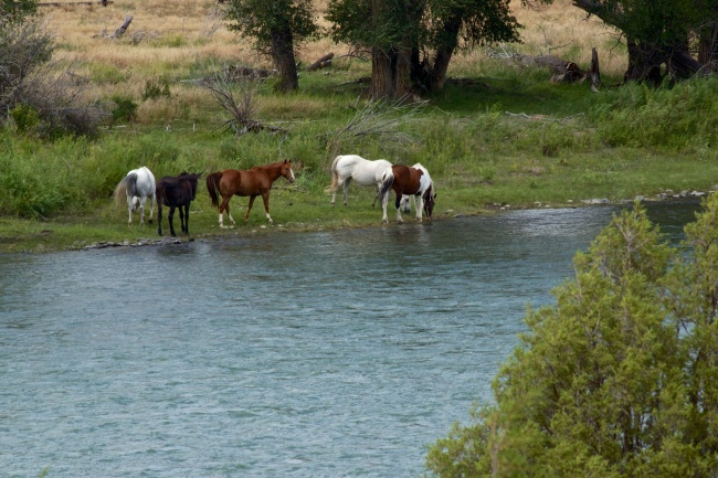 Yellowstone River North of Gardiner