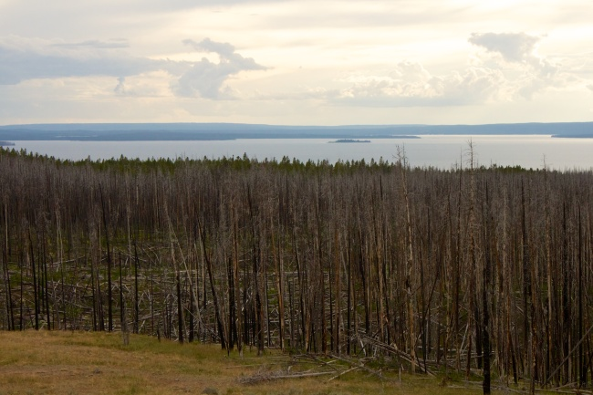 Forest Fire Scars